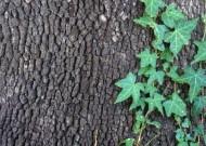 Pnącza to rośliny, które odznaczają się umiejętnością wspinania się po podporach przy pomocy różnych organów.